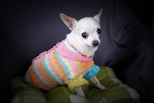 как связать одежду для собак