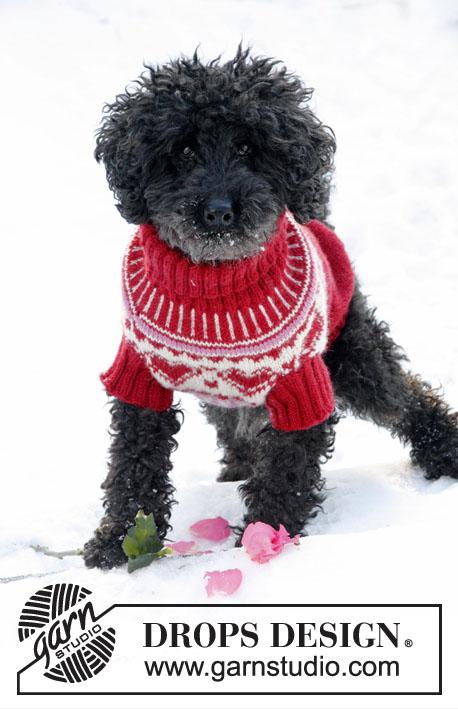 свитер для собаки, свитер длячетвероногого друга, вязание животным, вязание собакам, вязание собакам и кошкам, Валентинки, вязание спицами, , подарки к Рождеству, идеи для подарков, идеи для подарков к Новому году, День Святого Валентина, Drops