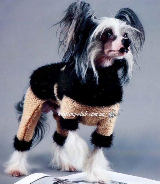 Комбинезондля Китайской Голой Хохлатой Собачки, вязание для собак, одежда для собак, вязаная одежда для собак, как связать свитер для собаки, одежда для собак на заказ, вязаная одежда для собак на заказ,комбинезон для собачки, как связатькомбинезон для собаки.