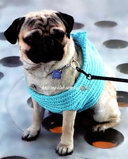 Жилетка для мопса, вязаная одежда для собак, вязаная одежда для собак на заказ, как связать одежду для собаки