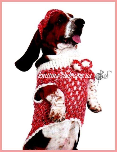 Вязаный комплект для бассет – хаунда, вязание для собак, одежда для собак, вязаная одежда для собак, как связать свитер для собаки, одежда для собак на заказ, вязаная одежда для собак на заказ, попона крючком для собаки, как связать попону для собаки.