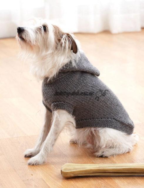 Пальто с капюшоном для собаки, как связать одежду для собаки, вязаная одежда для собак, вязаная одежда для собак на заказ, описание и схемы вязаной одежды для собак