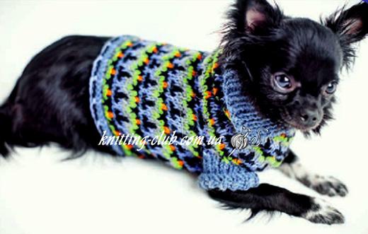 Свитер для маленькой собачки, вязание для собак, одежда для собак, вязаная одежда для собак, как связать свитер для собаки, свитер с жаккардовым узором для для маленькой собачки, одежда для собак на заказ, вязаная одежда для собак на заказ, свитер для спестрым узором для маленькой собачки, свитер для той-терьера,свитер для чихуахуа