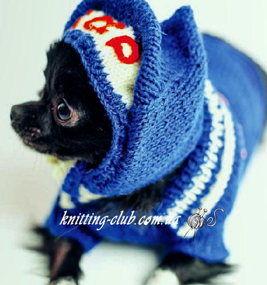 Свитер для карликового пинчера /чихуахуа / той терьера, вязание для собак, одежда для собак, вязаная одежда для собак, как связать свитер для собаки, свитер для карликового пинчера, одежда для той терьера, вязаная одежда для чихуахуа, вязаная одежда для собак на заказ, вязаная одежда для собак на заказ, свитер для маленькой собачки.