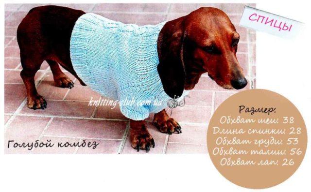 Голубой свитер для таксы, вязание для собак, одежда для собак, вязаная одежда для собак, как связать свитер для собаки, свитер для таксы, одежда для собак на заказ, вязаная одежда для собак на заказ