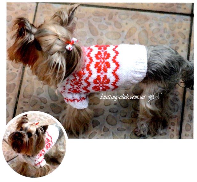 Свитер для йоркширского терьера, вязание для собак, одежда для собак, вязаная одежда для собак, как связать свитер для собаки, одежда для собак на заказ, вязаная одежда для собак на заказ, свитер для с жаккардовым узором для маленькой собачки, как связать свитер для собаки