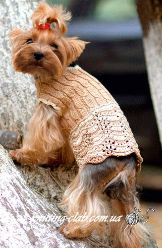 Свитер для Йоркширского терьера, одежда для собак, вязаный свитер для собаки, вязаный свитер для ,Йоркширского терьера, вязание на заказ, вязание спицами, одежда для собак на зака
