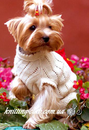 свитер для Йоркширского терьера, одежда для собак, вязаный свитер для собаки, вязаный свитер для ,Йоркширского терьера, вязание на заказ, вязание спицами, одежда для собак на заказ
