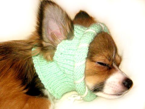 Вязание для животных, вязание для собак, одежда для собак, вязаная одежда для собак, вязаная шапка для собаки, вязание на заказ